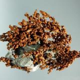 Cobre Dzhezkazgan, Karagandy (oblast), Kazakhztan. Itauz (m). Agregado dendrítico de cristales deformados, en matrz. 7,0 x 5,5 x 1,3 cm. (Autor: Carles Curto)