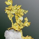 Oro Foresthill, Placer Co., Michigan Bluff, California, EUA. Eagle's Nest (m). Agregado arborescente de cristales aplanados en matriz de cuarzo (ejemplar de 1989).  4,4 x 2,8 x 1,0 cm. (Autor: Carles Curto)
