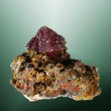 Cuprita Tsumeb, Otavi (mts.), Tsumeb (constituéncia), Oshikoto (prov.), Namibia. 1,0 x 1,2 x 0,7 cm. / cristal pral.= 0,7 x 0,7 x 0,6 cm. Cristal octaédrico rojo en matriz. Ejemplar obtenido en 1982. (Autor: Carles Curto)