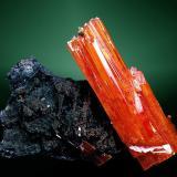 Crocoita+Romanèchita Dundas, Zeehan, Tasmania, Australia. Red Lead (m). 4,2x4,6x2,1 cm. / 4,2x1,2x0,9 cm. (cristal pral.) Cristal prismático, con tolva apical compleja, implantado en romanèchita. Ejemplar adquirido a Enrique Kucera el año 83 y traido de Australia por Josep Barba Formosa el mismo año. Figurado en: -Melgarejo, J.C. et alt 1989. (pg.61) -RBA (ed.). 2003. Minerales (fasc.49) -RBA (ed.) 2009. Minerales de gran tamaño (ficha crocoíta). (Autor: Carles Curto)