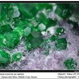 Uvarovite and amesite Saranovskii mine, Urals region, Russia fov 3 mm (Author: ploum)