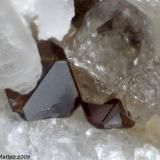 Uranmicrolite Grotta d'Oggi Quarry, San Piero in Campo, Campo nell'Elba, Elba Island, Livorno Province, Tuscany, Italy 0.96 mm group of two brown Uranmicrolite crystals (Author: Matteo_Chinellato)