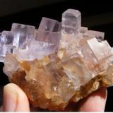 Fluorite Llamas Quarry. Duyos. Caravia. Asturias. Spain 8,5 cm (Author: nimfiara)