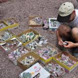 Escogiendo espécimenes en el patio de la casa de un minero. Fot. K. Dembicz. (Autor: Josele)