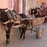 Aparcamiento de furgonetas ecológicas en la Medina. Fot. J. Scovil. (Autor: Josele)