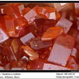 Vanadinite and wulfenite Mibladen, Midelt, Morocco fov 6 mm (Author: ploum)