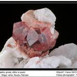 Apatite, garnet, albite, quartz Shigar Valley, Skardu, Pakistan fov 70 mm (Author: ploum)
