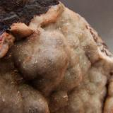 Aragonite on Hematite Florence Mine, Egremont, Cumbria, England, UK. FOV 30 x 20 mm (Author: nurbo)