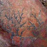 Óxidos de manganeso Ronda Norte (alrededores de Cáceres) - Cáceres capital - Cáceres - Extremadura - España 15 x 13 cm. Óxidos de manganeso en dendritas (Autor: Antonio GG)