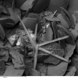 Reevesita Mina La Gallega, Ojén, Málaga, Andalucía, España. Cristales muy pequeños del raro carbonato de níquel reevesita sobre calcita. (Autor: Cesar M. Salvan)