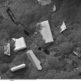 Torbernita Mina Obejo, Andújar, Jaén, Andalucía, España Otro clásico de los minerales uraníferos españoles (Autor: Cesar M. Salvan)