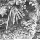 """Dewindtita y Fosfohedyfana Mina Esperanza, Villar de la Yegua, Salamanca, Castilla y León, España Un ejemplar histórico, esta muestra perteneció a Folch como """"Renardita"""". El estudio del ejemplar muestra que estaba compuesto por estas dos especies. (Autor: Cesar M. Salvan)"""