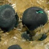 Malaquita sobre dolomita<br />Mina Teresita (Mina Aramo; Minas de Texeo), Llamo, Riosa, Comarca de Oviedo, Asturias, Principado de Asturias, España<br />Botones de 1 cm.<br /> (Autor: Quexigal)