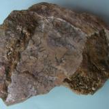 Óxido en dendrita Aldea Moret - Cáceres - Extremadura - España 7 x 7 cm. Una curiosa dendrita de óxido encontrada en una de las muchas calizas existentes en la zona. (Autor: Antonio GG)