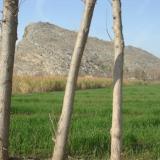 Pink topaz locality Katlang Ghundao hill , District Mardan , Pakistan (Author: ikram)