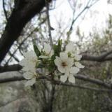Beautiful nature (Author: h.abbasi)