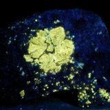 Norbergite, Diopside SW UV Rhein Property, Amity NY USA 15 cm (Author: Glenn Rhein)