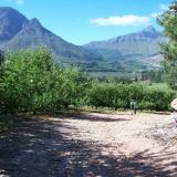 Apple farm, Villiersdorp (Author: Pierre Joubert)