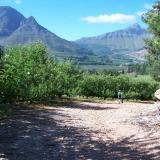 Apple farm, Villiersdorp (Author: Pierre Joubert)