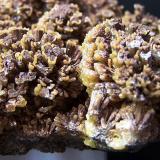 Mimetita Santa Eulalia - Chiuahua - México 13x8 cm Detalle de los crecimientos de los cristales, son como dos crecimientos uno amarillo por encima de uno de color marrón. (Autor: panchito28)