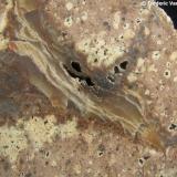 Calcedonia (variedad ágata) Nowy Kósciól, Kaczawskie Mts., Baja Silesia, Polonia Detalle de la pieza anterior. Encuadre 4 x 3 cm. aprox. (Autor: Frederic Varela)