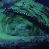 Calcedonia - Fluorescente Brasil 52 x 39 mm Luz UV onda corta. (Autor: Daniel C.M.)