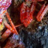 Crocoita (detalle) Mina Adelaide, Dundas, Tasmania, Australia 80X Detalle de la pieza anterior para apreciar los cristales prismáticos alargados. (Autor: prcantos)