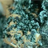 Pumpellita Paterson, Passaic County, New Jersey, Estados Unidos 4 mm. ancho de campo Detalle de los minúsculos agregados aciculares verdes de pumpellita en el espécimen anterior. (Autor: prcantos)