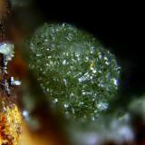 Annabergita. Villahermosa del Río, Castellón, Comunidad Valenciana, España. Grupo de cristales de 1,5 mm. (Autor: Antonio Carmona)
