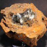 Gypsum (var Selenite) Naica, Chihuahua, Mexico 13.7 x 11.4 cm (Author: Don Lum)