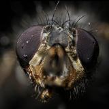Error al apilar 400 fotografías. El resultado del apilado no es bueno (Autor: Oscar Fernandez)