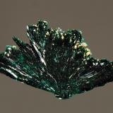 Atacamite La Farola Mine, Cerro Pintado, Tierra Amarilla,, Copiapo Prov., Chile 1.5 x 2.5 cm. A floater fan-shaped spray of atacamite. (Author: crosstimber)