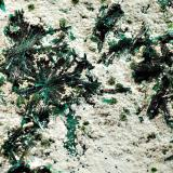 Atacamite La Farola Mine, Cerro Pinatdo, Tierra Amarilla,, Copiapo Prov., Chile 8.0 x 12.5 cm, FOV~3.5 cm Flat-laying radial sprays of lustrous, dark green atacamite on a thin layer of off-white halloysite with isolated spherical sprays of light olive green libethenite and blue-green pseudomalachite. (Author: crosstimber)