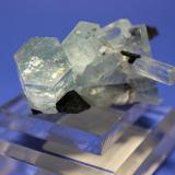 Beryl (var Aquamarine), Schorl Erongo Mountains, Erongo Region, Namibia 5.2 x 5.0 cm (Author: Don Lum)