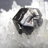 Galena, quartz Palomo Mine, Castrovirreyna Province, Huancavelica Department, Peru Galena crystal 2 x 1,5 cm (Author: Tobi)