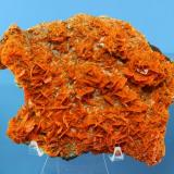 Wulfenite Xin Jiang Province, China 15 x 11 x 5 cm (Author: Don Lum)