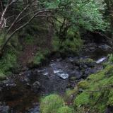 A stream in the woods, somewhere on the Isle of Skye, Scotland. The stream/creek/small river I spent three hours lying face down in looking for silver nuggets... (Author: Mike Wood)