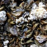 Siderita, calcopirita, ankerita-dolomita series Mina la Gitana, Abanto-Zierbena, Vizcaya, España. Ancho de imagen 3 cm. (Autor: María Jesús M.)