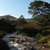 And the scenery is nice. These Scots Pine trees (Caledonian Pines) are one of my favourite tree species. (Author: Mike Wood)