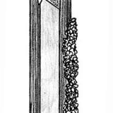Ferberita Panasqueira (Aldeia de São Francisco de Assis), Covilhã, Castelo Branco, Cova da Beira, Centro (reg.), Portugal. 8,5x2,3x1,4 cm. Dibujo de detalle del ejemplar (vista lateral) (Autor: Carles Curto)