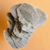 Gypsum (Desert Rose) Samalayuca Desert, Mun. de Ahumada, Chihuahua, Mexico 9.5 * 6.5 cm (Author: h.abbasi)