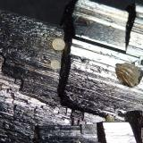 Ferberita, Moscovita Minas da Panasqueira, Aldeia de São Francisco de Assis, Covilhã, Castelo Branco, Cova da Beira, Centro, Portugal 7 x 6 cm.  Detalle (Autor: javier ruiz martin)