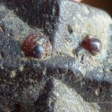 Estaurolita, Mica, Granate (Almandino) Cañón Hondo, Taos, Nuevo Mexico, USA 1,5 x 1 cm.  Detalle (Autor: javier ruiz martin)