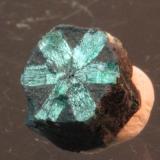 Beryl var emerald Muzo Mine, Municipio de Muzo, Vasquez-Yacopí, Boyacá, Colombia 7 x 6 mm (Author: Don Lum)