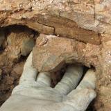 Geoda Montseny - 30 abril 2014 018.jpg (Author: Joan Martinez Bruguera)