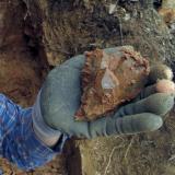 Geoda Montseny - 30 abril 2014 010.jpg (Author: Joan Martinez Bruguera)