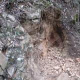 Geoda Montseny - 30 abril 2014 001.jpg (Author: Joan Martinez Bruguera)