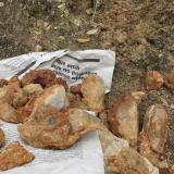 Geoda Montseny - 30 abril 2014 024.jpg (Author: Joan Martinez Bruguera)