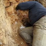 Geoda Montseny - 30 abril 2014 013.jpg (Author: Joan Martinez Bruguera)