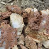 Geoda Montseny - 30 abril 2014 027.jpg (Author: Joan Martinez Bruguera)
